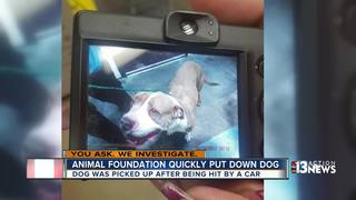 YOU ASK: Dog euthanized after 30 minutes