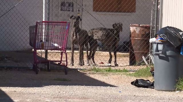 Animal Control takes custody of skinny dogs