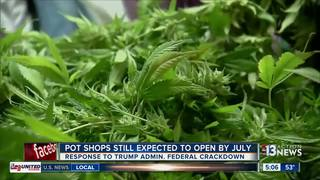 Nev. pot plans firm after White House statement