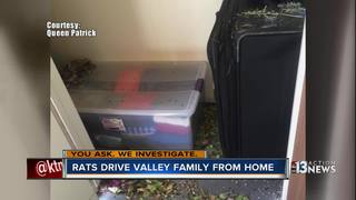 YOU ASK: Rats destroy family's possessions