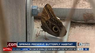 Butterfly habitat now open at Springs Preserve