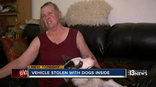 CAUGHT ON CAMERA: Man takes truck with dogs
