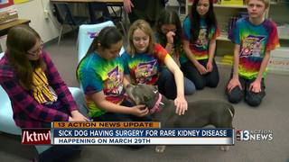 UPDATE: Dog getting surgery for rare disease