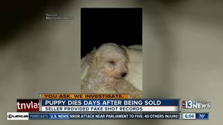 YOU ASK: Puppy dies days after being bought