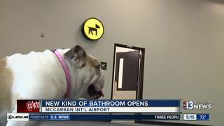 McCarran installs new bathrooms for dogs