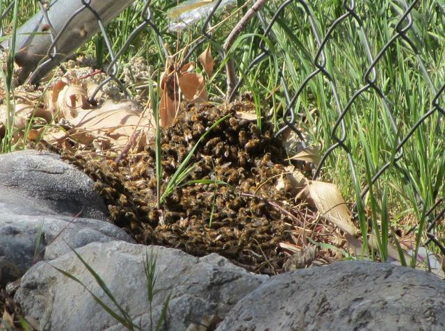 Swarming bees scare Las Vegas couple into action