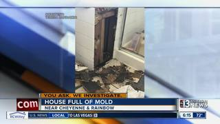 YOU ASK: Vegas family find mold in their home