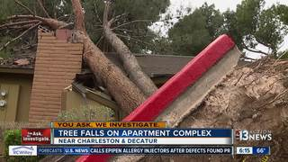 Tree removed after falling on woman's apartment