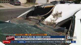 YOU ASK. Tree falls on woman's car at apartment
