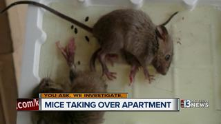 YOU ASK: Mice invade Las Vegas apartment complex
