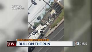 Loose bull runs across Las Vegas streets