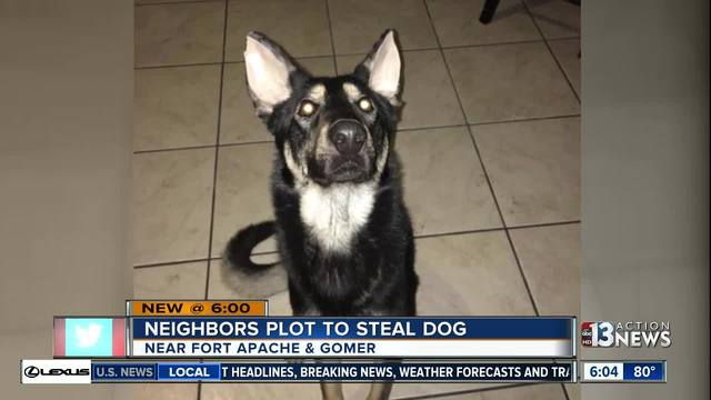 Neighbors accused of plotting to steal dog