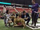 Dog show raises money for Animal Foundation