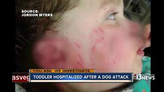 YOU ASK: Dog back with owner after girl attacked