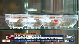 Pot industry hoping to apprentice new employees