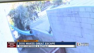 Dog escapes Las Vegas 'doggie daycare'