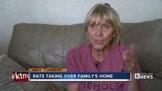 Tenants say landlord won't fix giant rat problem