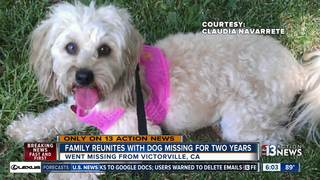 Dog reunited with family after 2-year journey