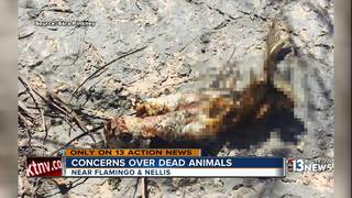 Animals found dead in country club pond