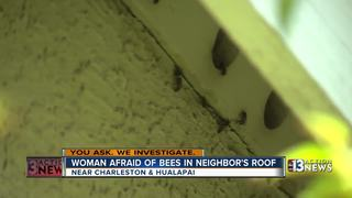 Woman faces issues with neighbor with bees