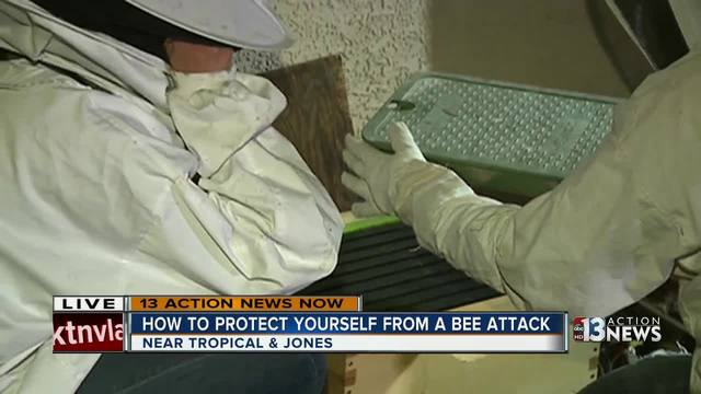 Live bee removal demonstration