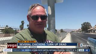 Dead chickens found in Las Vegas picked up