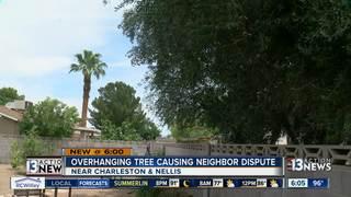 UPDATE: Neighbors clean up invasive olive tree