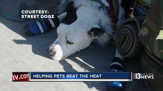Organization helping homeless pets beat the heat