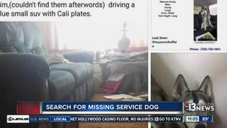 Dog that escaped 'doggie daycare' still missing