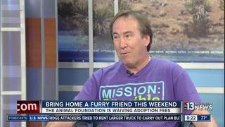 Animal Foundation waiving adoption fees