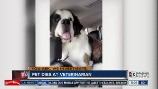 Woman says misplaced feeding tube killed her dog