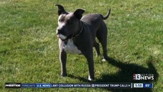Discrepancies abound in deadly dog shooting
