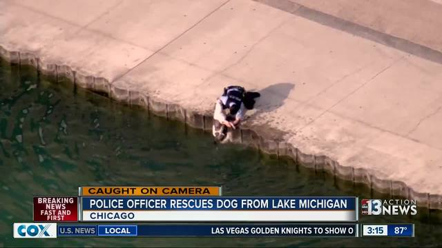 Police officer saves thirsty dog after it tumbles into Lake Michigan