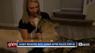Husky reunited with owner after police step in