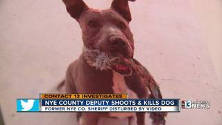 Former sheriff sees cover-up in dog shooting