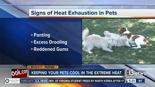 Tips for keeping your kids, pets safe from heat