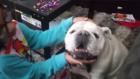 Las Vegas dog feared stolen returned to family