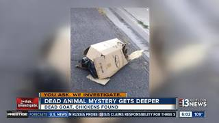 More dead animals found dumped in east Las Vegas