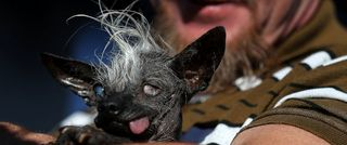 World's Ugliest Dog Contest awards underdogs'...