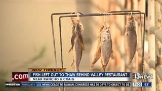 Fish left to thaw outside Las Vegas restaurant