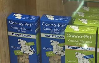 Hemp products may help dogs with fireworks