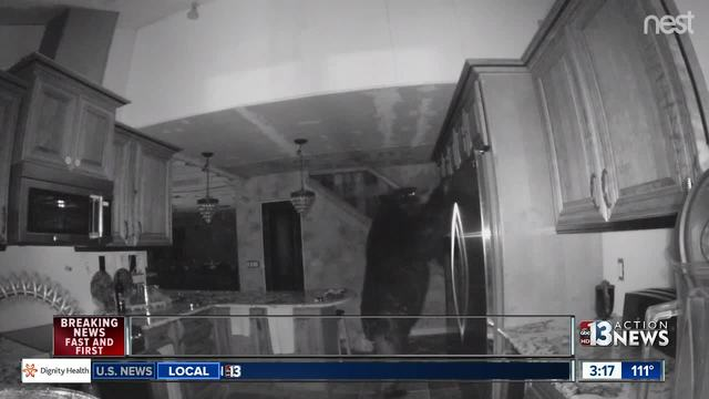 Bear opens fridge, spends 5 hours in home
