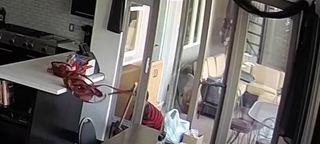 Thief steals purse through doggie door