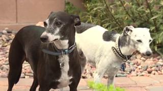 Coyote kills Henderson man's dog in backyard