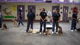 Pups on Parole helps rehabilitate dogs, inmates