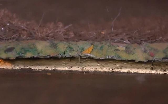 Apartment tenants complain of mold