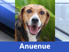 13 Adorable, adoptable animals from Nevada SPCA