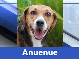 13 Adorable, adoptable animals from Nevada SPCA