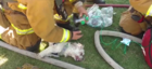 Firefighters rescue dog from burning Calif. home