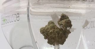 Nevada judge denies request to stop pot rules